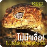 https://sites.google.com/a/srk.ac.th/sci/geckos